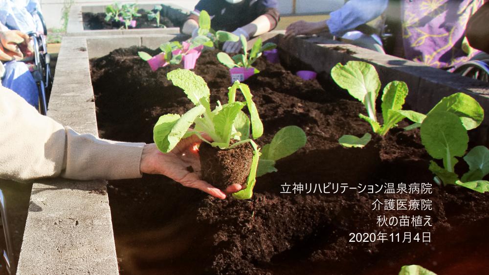 【介護医療院】秋の苗植え